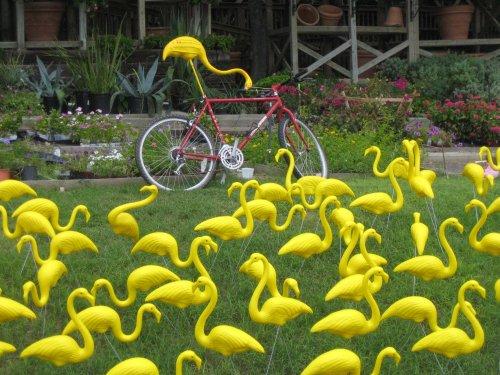 Rare Yellow Flamingo | Flamingos | Pinterest