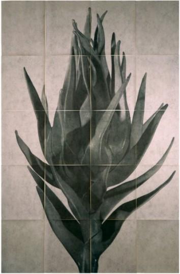 Sergio Zavatteri - Cynara Cardunculusll